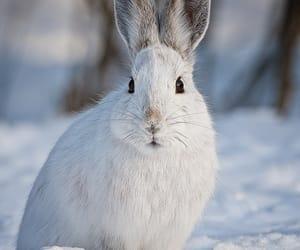 Animales, naturaleza, and conejo image
