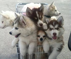dog, soft, and dogs image