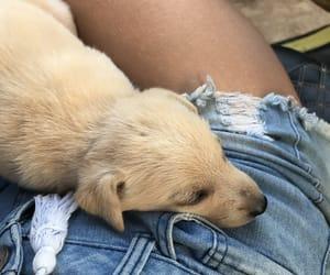 animal, asleep, and baby image
