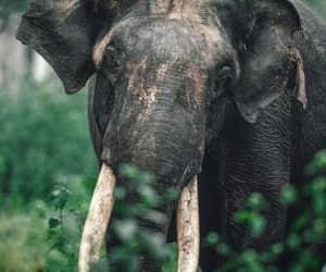 animal, elephant, and india image