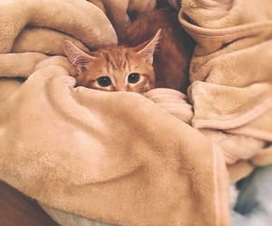 Young cat tucked in blanket