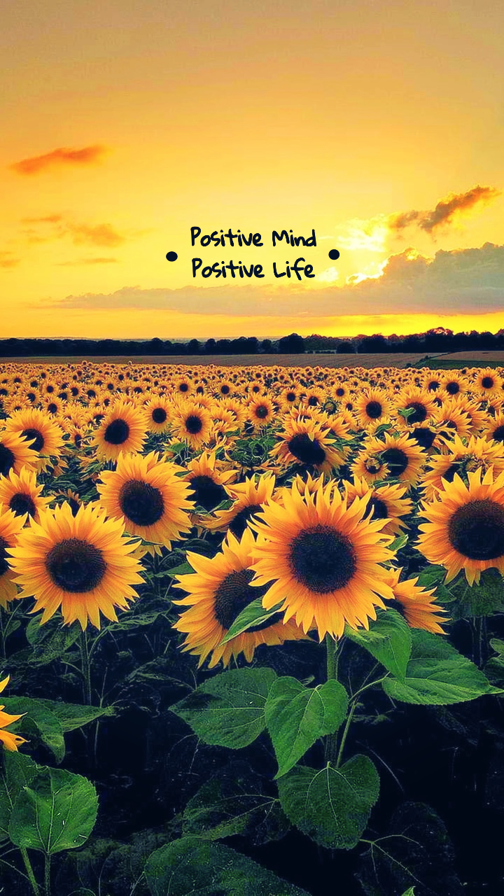 background, flowers, and life image
