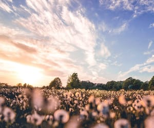 flowers, landscapes, and pink image