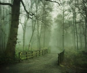 forest, misty, and nature image