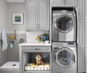 clean, dog, and want image