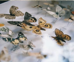 butterfly, collection, and vintage image