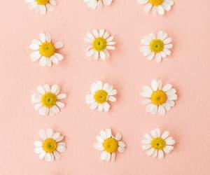 flower, flower power, and flower love image