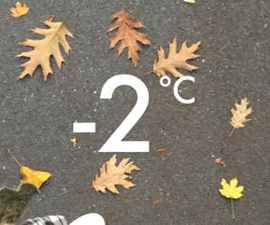 Algeria, cold, and leaves image