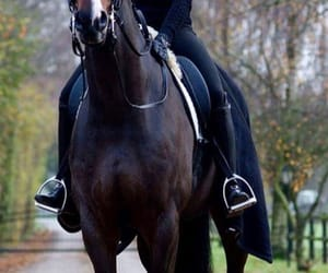 bay, equestrian, and ride image
