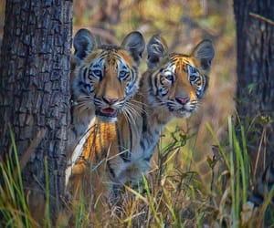 Animales, belleza, and felinos image