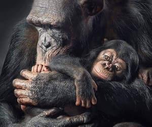 Animales, ternura, and naturaleza image