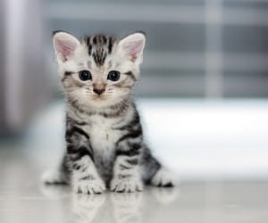 cat and kitten image