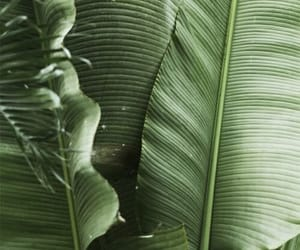 theme, green, and plants image