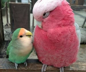 bird, animal, and pink image