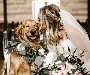 bride, dog, and wedding image