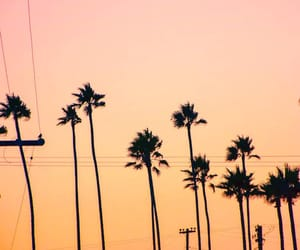 california, palm trees, and pastel image