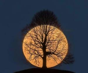 arvore, lua, and moon image