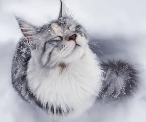 animal, cold, and cute image