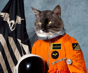 astronaut, cat, and klaxons image