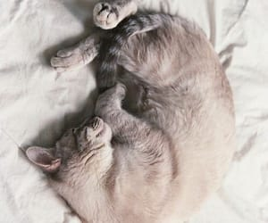 adorable, bean, and cozy image