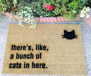 animals, cats, and doormat image