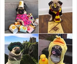 adorable, cute dog, and pug image