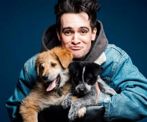 panic! at the disco, brendon urie, and cute image