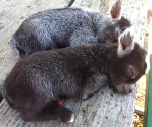 donkey, animal, and baby image
