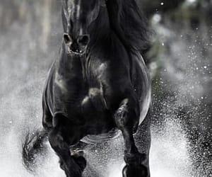 animal, horse, and wild image
