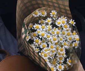daisy, flowers, and beauty image