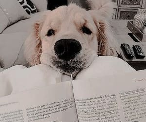 adorable, aesthetic, and dog image