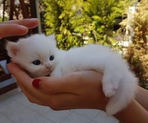 cat, animals, and beautiful image