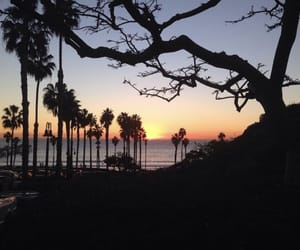 california, sunset, and tree image