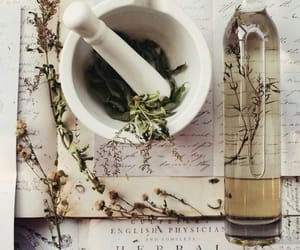herbs, magic, and herbal image