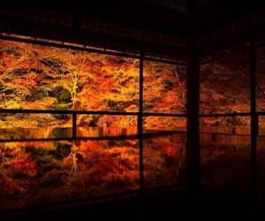 autumn, kyoto, and foliage image