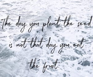 fruit, inspiration, and life image