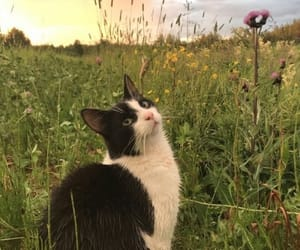 cat, aesthetic, and sunset image