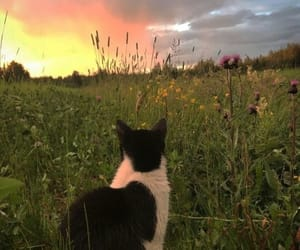 cat, nature, and sunset image