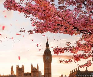 spring, flowers, and london image