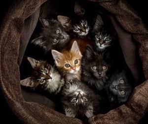 kitten, kitty, and pet image