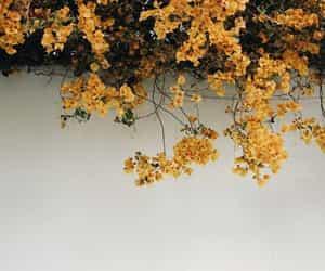 flowers, orange, and aesthetic image