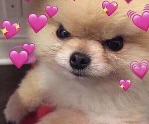 dog, cute, and hearts image