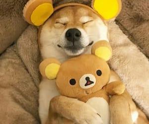 dog, pet, and animal image