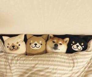 animal, doggie, and doggies image