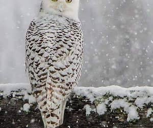 nature, owl, and animals image