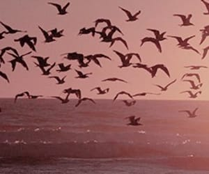 sunset, birds, and ocean image