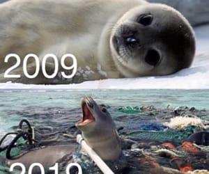 animal, nature, and plastic image