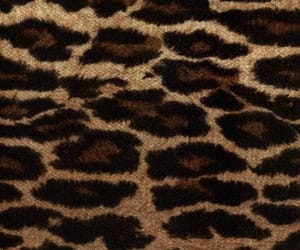 aesthetic, animal print, and babe image