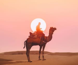 animals, camel, and photography image