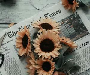 sunflower, flowers, and newspaper image
